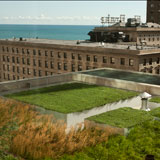 900 North Michigan Green Roof East